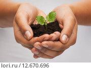 Купить «woman hands holding plant in soil», фото № 12670696, снято 12 декабря 2013 г. (c) Syda Productions / Фотобанк Лори