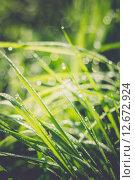 Купить «Капли росы на траве», фото № 12672924, снято 21 мая 2015 г. (c) Анна Павлова / Фотобанк Лори
