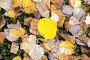 Осенняя листва с каплями дождя, фото № 12694756, снято 13 сентября 2015 г. (c) Алексей Маринченко / Фотобанк Лори