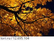 Осеннее дерево ночью. Стоковое фото, фотограф Крон Светлана Сергеевна / Фотобанк Лори
