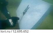 Купить «Подводный художник Юрий Адексеев рисует картину под водой в озере Байкал», видеоролик № 12695652, снято 5 сентября 2014 г. (c) Некрасов Андрей / Фотобанк Лори