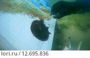 Купить «Подводный художник Юрий Адексеев рисует картину под водой в озере Байкал», видеоролик № 12695836, снято 5 сентября 2014 г. (c) Некрасов Андрей / Фотобанк Лори