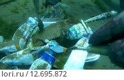 Купить «Подводный художник Юрий Адексеев рисует картину под водой в озере Байкал», видеоролик № 12695872, снято 5 сентября 2014 г. (c) Некрасов Андрей / Фотобанк Лори