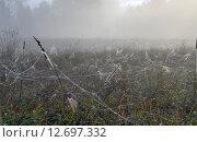 Купить «Паутины на лугу в осеннее туманное утро в Московской области», фото № 12697332, снято 15 сентября 2015 г. (c) Валерий Боярский / Фотобанк Лори