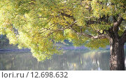 Купить «Ива возле воды летом», видеоролик № 12698632, снято 16 сентября 2015 г. (c) Володина Ольга / Фотобанк Лори