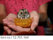 Купить «Хомячок на руках молодой женщины», фото № 12701164, снято 11 марта 2014 г. (c) Анатолий Маркин / Фотобанк Лори