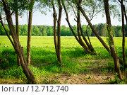 Необычный яркий весенний очаровательный лес. Стоковое фото, фотограф Екатерина Ветошкина / Фотобанк Лори