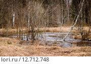 Ручей в лесу весной. Стоковое фото, фотограф Екатерина Ветошкина / Фотобанк Лори