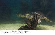 Купить «Морская черепаха», видеоролик № 12725324, снято 30 марта 2015 г. (c) Юлия Машкова / Фотобанк Лори