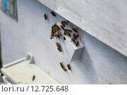 Пчелы у закрытого летка. Стоковое фото, фотограф Анатолий Матвейчук / Фотобанк Лори