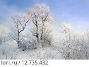 Иней на деревьях. Стоковое фото, фотограф Алексей Елфимчев / Фотобанк Лори
