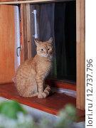 Купить «Рыжий кот сидит вечером у окна», эксклюзивное фото № 12737796, снято 22 мая 2015 г. (c) Яна Королёва / Фотобанк Лори