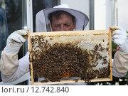 Купить «Berlin, Germany, beekeeper inspects a honeycomb of his bee colony», фото № 12742840, снято 10 октября 2014 г. (c) Caro Photoagency / Фотобанк Лори