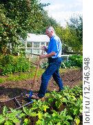 Купить «Пожилой мужчина копает грядку на огороде суперлопатой», эксклюзивное фото № 12746948, снято 16 августа 2015 г. (c) Наталья Федорова / Фотобанк Лори