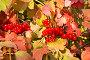 Гроздья красной калины, фото № 12762784, снято 24 сентября 2015 г. (c) Наталья Волкова / Фотобанк Лори