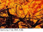 Фото пламени большого пожара. Горящие деревья. Огонь. Стоковое фото, фотограф Дарья Андрианова / Фотобанк Лори