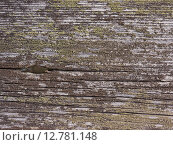 Серая текстура деревянной доски. Старое дерево. Стоковое фото, фотограф Дарья Андрианова / Фотобанк Лори