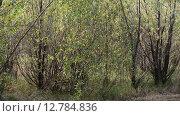 Купить «Заросли ивы в начале осени», видеоролик № 12784836, снято 30 сентября 2015 г. (c) Володина Ольга / Фотобанк Лори