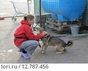 Купить «Приручение бездомной собаки в приюте волонтером», фото № 12787456, снято 7 сентября 2012 г. (c) Елена Мусатова / Фотобанк Лори