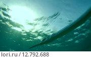 Купить «Рыбы чистильщики (Aspidontus taeniat) чистят морскую щуку Саргана (Belone belone) на коралловом рифе, Красное море, Марса-эль-Алам, бухта Абу-Дабаб, Египет», видеоролик № 12792688, снято 1 июня 2015 г. (c) Некрасов Андрей / Фотобанк Лори