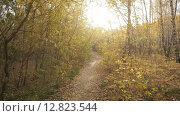 Прогулка по осеннему лесу в солнечный день. Стоковое видео, видеограф Рамиль Бакиров / Фотобанк Лори