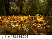Листва. Стоковое фото, фотограф Скрипник Анастасия / Фотобанк Лори