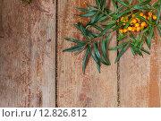 Ветка с ягодами облепихи на деревянном столе. Стоковое фото, фотограф Виктор Колдунов / Фотобанк Лори