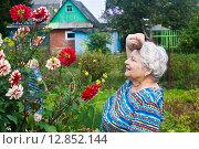 Купить «Пожилая женщина устало вытирает лоб рядом с клумбой георгинов, которые она вырастила сама», эксклюзивное фото № 12852144, снято 16 августа 2015 г. (c) Наталья Федорова / Фотобанк Лори
