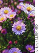 Полевые цветы. Стоковое фото, фотограф Аня Шумкова / Фотобанк Лори