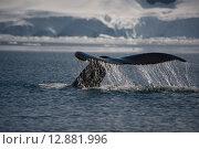 Купить «Хвост горбатого кита», фото № 12881996, снято 1 января 2012 г. (c) Vladimir / Фотобанк Лори