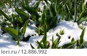 Зима-весна. Стоковое фото, фотограф Тимофеева Алина / Фотобанк Лори