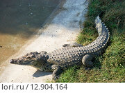 Крокодил у пруда (2015 год). Редакционное фото, фотограф Александр Щепин / Фотобанк Лори