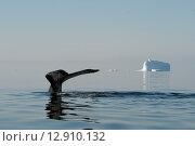 Купить «Хвост горбатого кита в воде на фоне льдин», фото № 12910132, снято 25 февраля 2020 г. (c) Vladimir / Фотобанк Лори