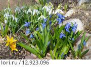 Купить «Клумба с весенними цветами», эксклюзивное фото № 12923096, снято 28 апреля 2015 г. (c) Елена Коромыслова / Фотобанк Лори