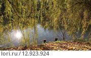Купить «Осенний пейзаж с прудом и ветками ивы над ним», видеоролик № 12923924, снято 22 октября 2015 г. (c) Наталья Волкова / Фотобанк Лори