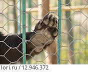 Купить «Зоопарк, медвежья лапа», эксклюзивное фото № 12946372, снято 1 октября 2012 г. (c) Dmitry29 / Фотобанк Лори