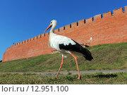 Купить «Белый аист», эксклюзивное фото № 12951100, снято 21 августа 2015 г. (c) Александр Тарасенков / Фотобанк Лори