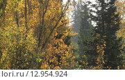 Лес. Осень. Стоковое видео, видеограф Марина Туманина / Фотобанк Лори