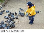 Купить «Мальчик и стая голубей», фото № 12958160, снято 15 октября 2013 г. (c) Наталья Степченкова / Фотобанк Лори