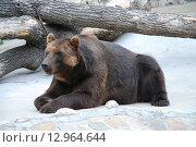 Медведь. Стоковое фото, фотограф Надеждин Александр / Фотобанк Лори
