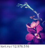 Купить «Beautiful orchid flower», фото № 12976516, снято 15 августа 2018 г. (c) PantherMedia / Фотобанк Лори