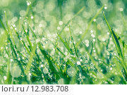 Купить «Dew on green grass», фото № 12983708, снято 22 мая 2019 г. (c) PantherMedia / Фотобанк Лори