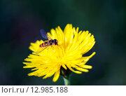 Муха на цветке. Стоковое фото, фотограф Sergey Borisov / Фотобанк Лори