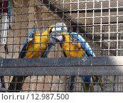 Попугаи. Стоковое фото, фотограф Игорь Разумов / Фотобанк Лори