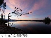Вечер в Карелии. Стоковое фото, фотограф Максим Судоргин / Фотобанк Лори