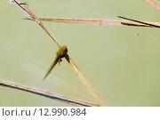 Головастик в пруду. Стоковое фото, фотограф Александр Щепин / Фотобанк Лори