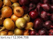 Желтый и красный репчатый лук. Стоковое фото, фотограф Виктор Колдунов / Фотобанк Лори