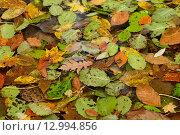 Сухие осенние листья на поверхности воды. Стоковое фото, фотограф Станислав Самойлик / Фотобанк Лори
