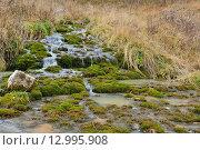 Лесной ручей. Стоковое фото, фотограф Станислав Самойлик / Фотобанк Лори