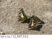 Бабочки. Стоковое фото, фотограф Ханаева Фатима / Фотобанк Лори